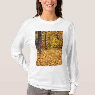 T-shirt Les Etats-Unis, Missouri, le comté de Boone, forêt