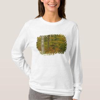 T-shirt Les Etats-Unis, New Hampshire, Livermore, montagne