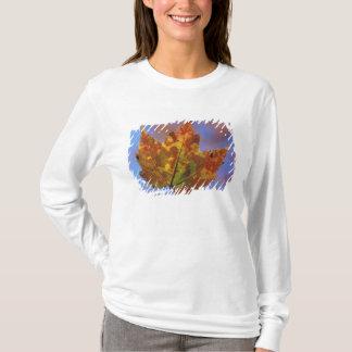 T-shirt Les Etats-Unis, New Hampshire, montagnes blanches,