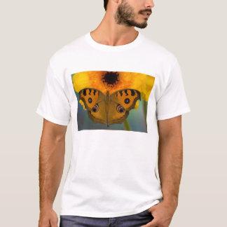 T-shirt Les Etats-Unis, WA, Sammamish, Butterfy tropical 2