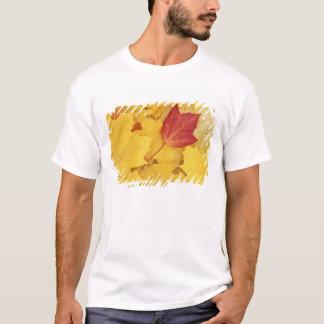 T-shirt Les Etats-Unis, Washington, arborétum de pinson,
