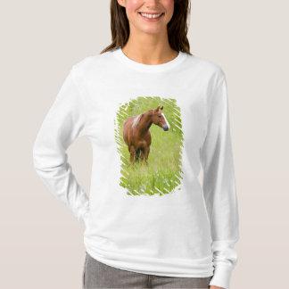 T-shirt Les Etats-Unis, Washington, champ de cheval au