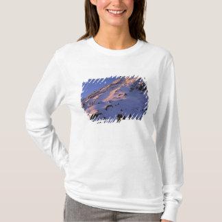 T-shirt Les Etats-Unis, Washington, parc national de mont