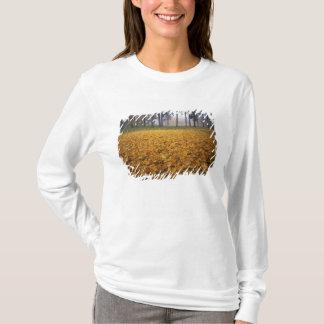 T-shirt Les Etats-Unis, Washington, Spokane, parc de