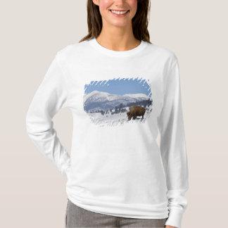 T-shirt Les Etats-Unis, WY, Yellowstone NP, bison de bison