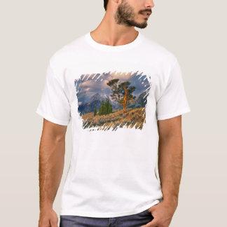T-shirt Les Etats-Unis, Wyoming, Teton grand NP. Le lever