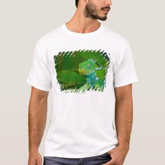 T-shirt Les Fidji crested l'iguane, parc de Kula Eco, Viti