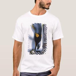 T-shirt Les Îles Falkland. Le pingouin de roi tend l'oeuf