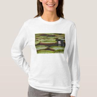 T-shirt Les Îles Maurice, Pamplemousses, SSR botanique