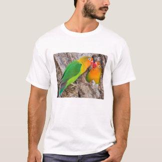 T-shirt Les perruches de Fischer embrassant, Afrique
