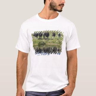 T-shirt Les vaches se sont reflétées dans le canal,