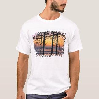 T-shirt L'état de Washington des Etats-Unis, NP olympique.