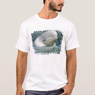 T-shirt Leucas de baleine, de Delphinapterus de beluga),