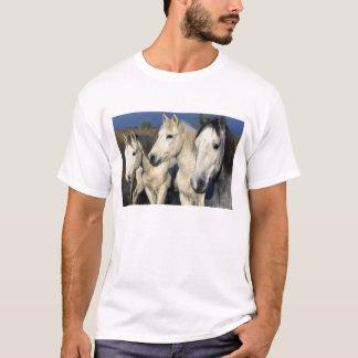 T-shirt L'Europe, France, Ile del la Camargue. Camargue 3