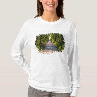 T-shirt L'Europe, Italie, Toscane, arbre a rayé la route