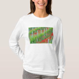 T-shirt L'Europe, Italie, Toscane. Pavots rouges colorés