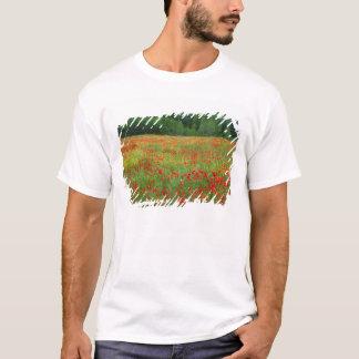 T-shirt L'Europe, Italie, Toscane, pavots rouges dans le