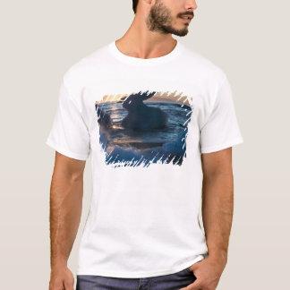 T-shirt Lever de soleil et formation d'iceberg sur la