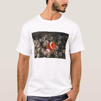 T-shirt L'Indonésie, Komodo. Clownfish marron, ou