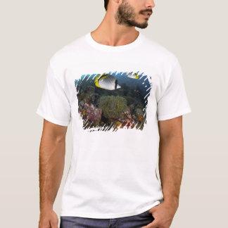 T-shirt L'Indonésie, parc national de Komodo. Rayé