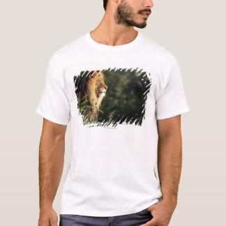 T-shirt Lion africain masculin au zoo à Washington, dc 2