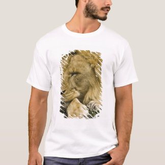 T-shirt Lion africain, Panthera Lion, fixation endormie