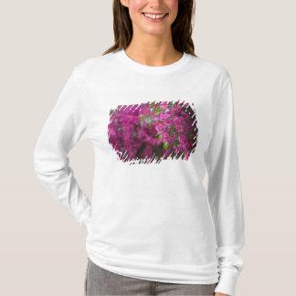 T-shirt L'Italie, Sicile, Cefalu, cour fleurie par