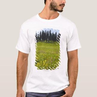 T-shirt L'Italie, Toscane, Val D'Orcia, arbres sur le pré