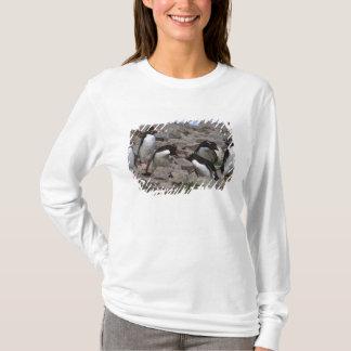 T-shirt L'Océan Atlantique, Îles Falkland. Rockhopper 2