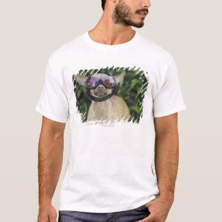 T-shirt Lunettes de port de chiwawa