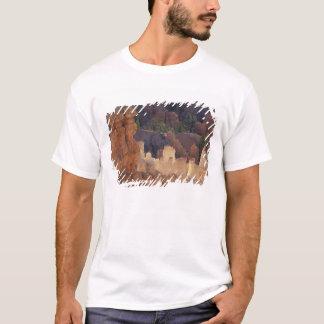 T-shirt L'Utah, parc national de canyon de Bryce.