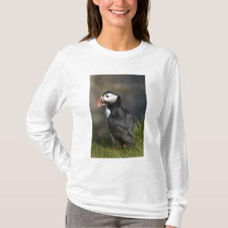 T-shirt Macareux (arctica de Fratercula), Staffa, outre
