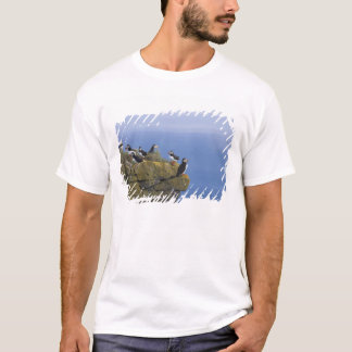 T-shirt Macareux atlantiques (arctica de Fratercula) sur