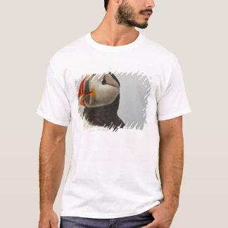 T-shirt Macareux atlantiques sur l'île de joint de Machias