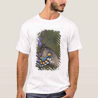 T-shirt Machaon de Pipevine, philenor de Battus, adulte