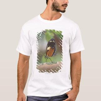 T-shirt Macro de papillon