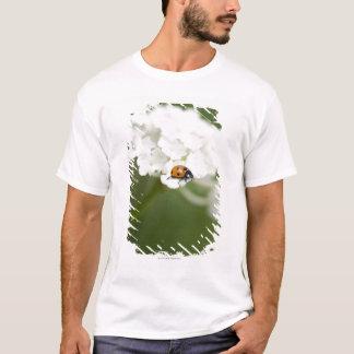 T-shirt Macro image de Ladybird sur une fleur sauvage