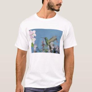 T-shirt Mâle se nourrissant de la nicotiana (espèces de