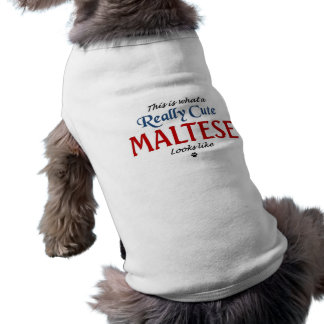 T-shirt Maltais mignon