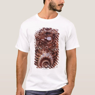 T-shirt Mandebrot