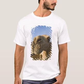 T-shirt Marché de chameau, le Caire, Egypte