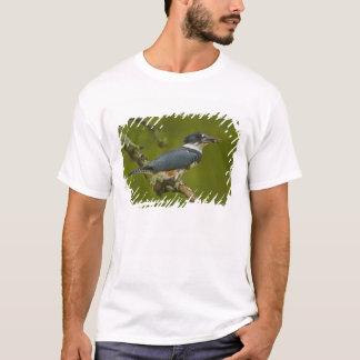 T-shirt Martin-pêcheur ceinturé de femelle avec la proie