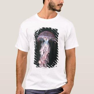 T-shirt Méduses juvéniles, Chrysaora (Pelagia)
