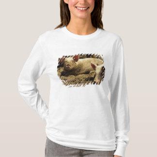 T-shirt MOIS : Chambre Genevieve, ferme de porc