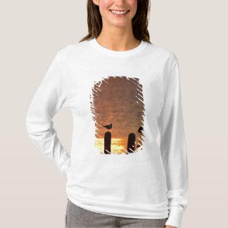 T-shirt Mouettes sur des empilages à Laguna Madre,