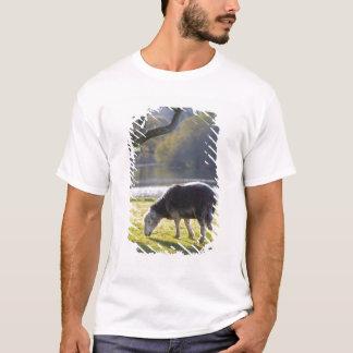 T-shirt Moutons de Herdwick au rocher de moines,