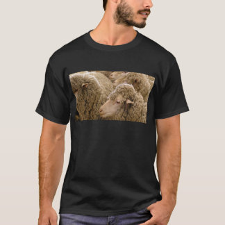 T-shirt Moutons de Merino