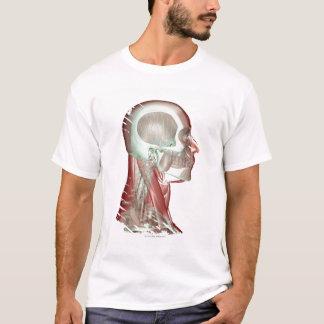 T-shirt Musculoskeleton de la tête et du cou 2