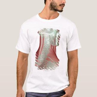 T-shirt Musculoskeleton du cou 3