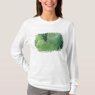 T-shirt N.A., Etats-Unis, Arizona, Tucson, désert de